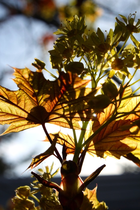 illuminated leaves